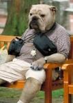dog-man-129861-284-400