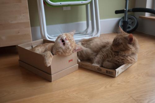 catbox4
