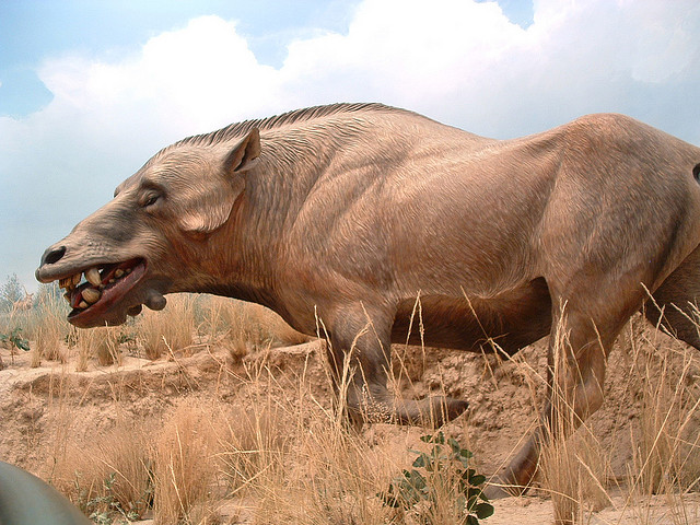 dog-headed pig monster' sightings reportednamibian villagers