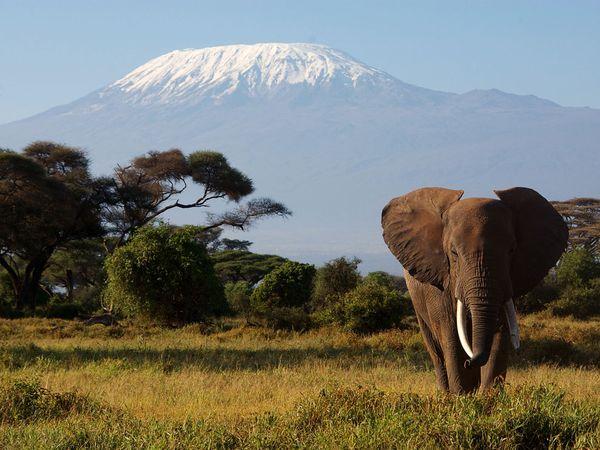 kilimanjaro-tanzania_9095_600x450