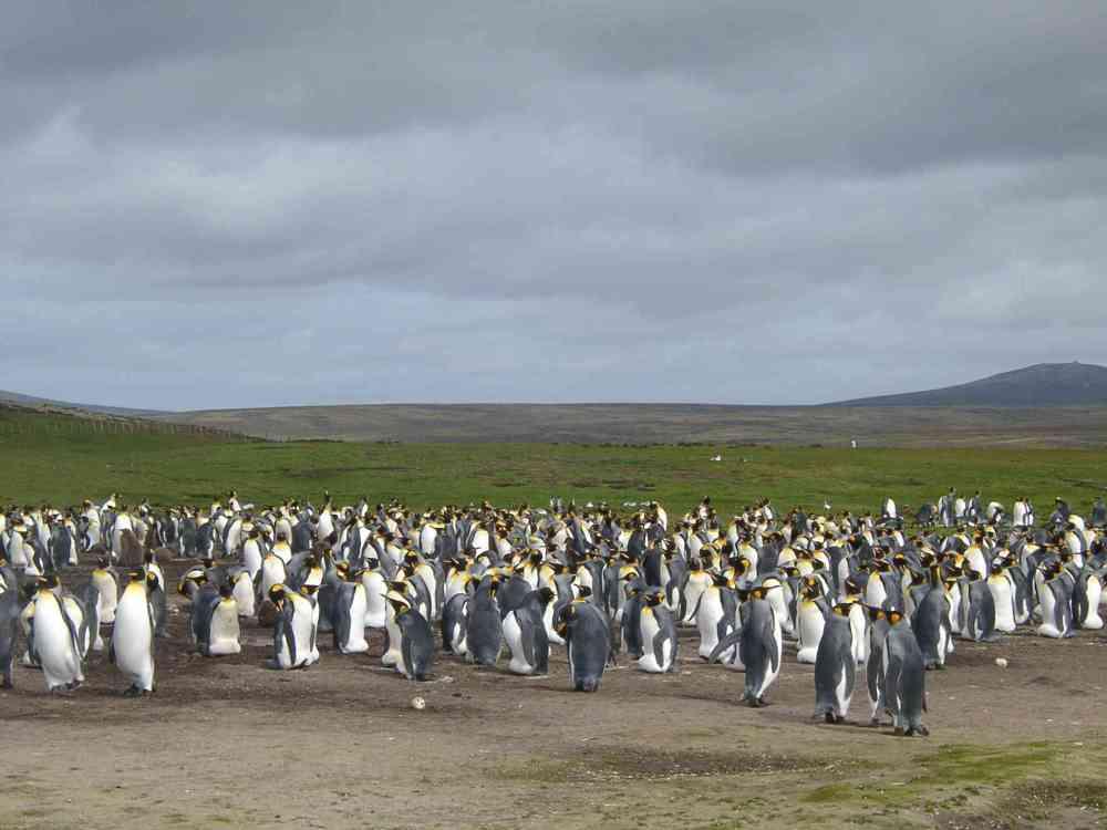 Falkland_Islandsx