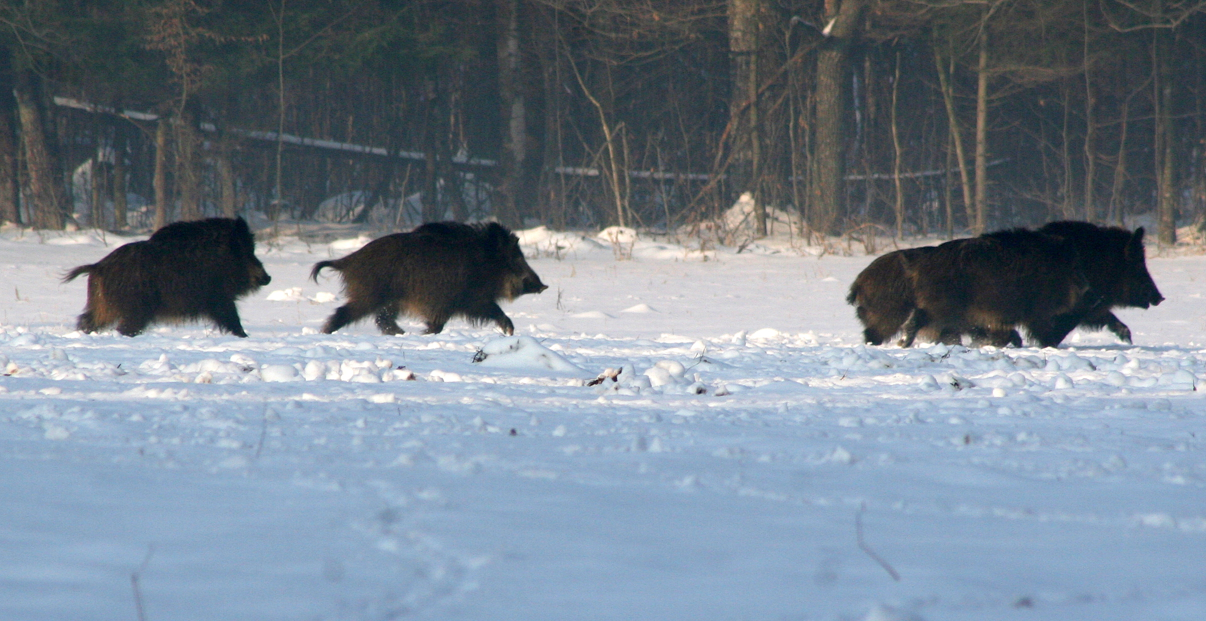 The Northern March of the Wild Hogs | Markosun\'s Blog