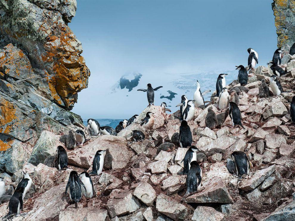 ng booth island antarctica
