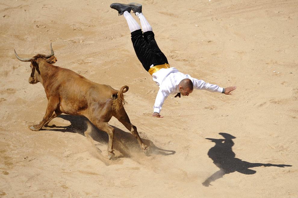 bull10