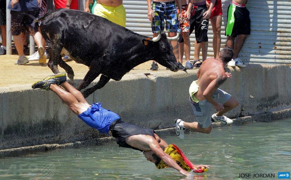bull14