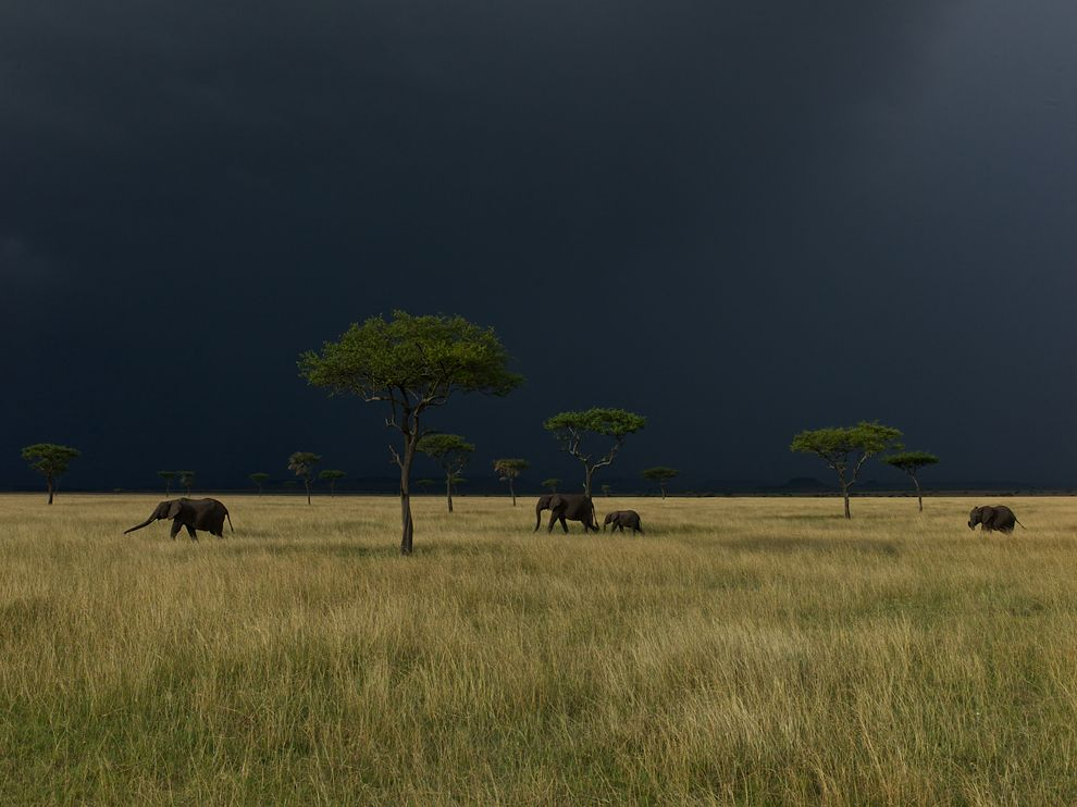 ng elephants-serengeti-