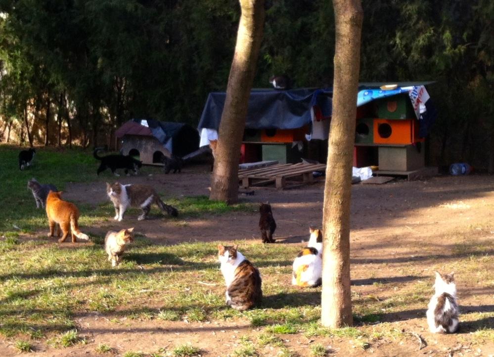 cat park4