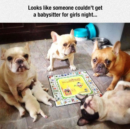 funny-dogs-playing-puppies-game