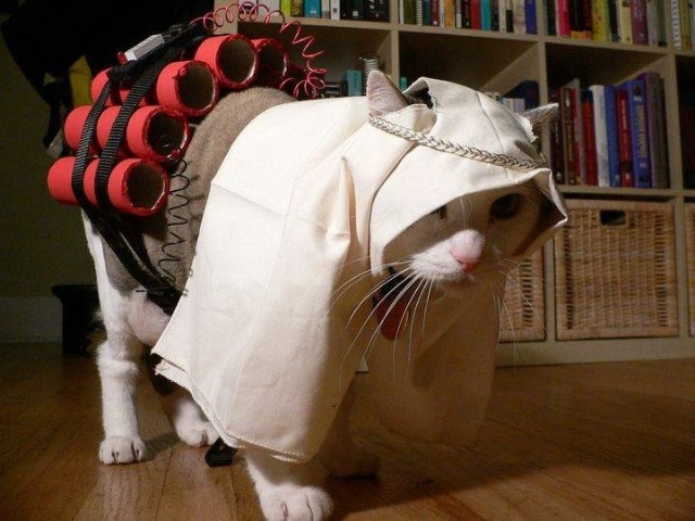 cat terrorist