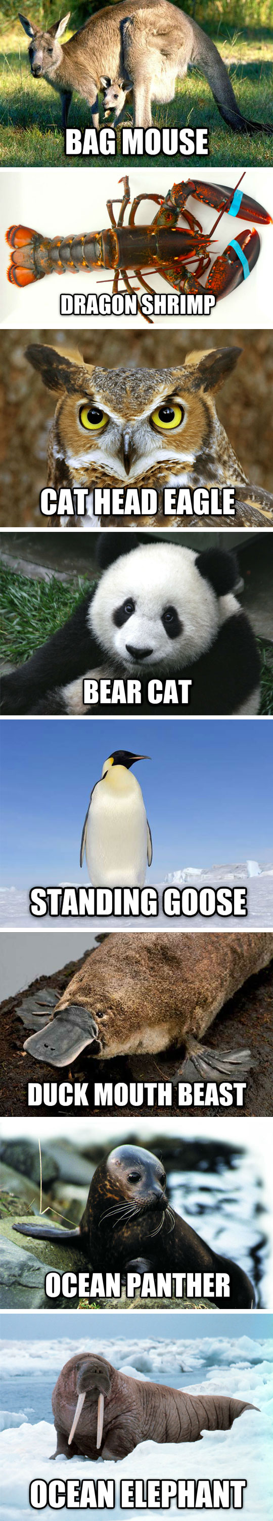 Funny Names For Animals Meme : Duck mouth beast standing goose and ocean elephant