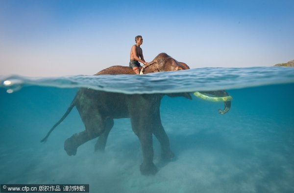 ***EXCLUSIVE*** HAVELOCK ISLAND, ANDAMAN & NICOBAR ISLANDS - UNDATED:  Rajan, 61, the world's last and only swimming elephant spends time foraging in the jungle and swimming in the sea with his mahout (elephant driver) Nazrool, 59 Havelock Island. Andaman and Nicobar Islands. Rajan, the world's last and only ocean swimming elephant is edging a step closer to a well-earned retirement. Celebrated the world over, the long in the tusk three-ton bull elephant has almost reached the £37,000 target his owners need to pay back the loan they took out to buy his freedom. That was three years ago and in the years since, Rajan, 61, has entertained and stunned photographers all willing to pay for the privilege of spending time with the world's last swimming elephant. Looking forward to quiet days spent foraging through the jungle on Havelock Island, or taking a leisurely swim through the crystal clear waters of the Indian Ocean, Rajan and his dedicated mahout (elephant driver) Nazrool, 59, are ready to enter their dotage together. IMAGE SUPPLIED BY JODY MACDONALD/BARCROFT MEDIA LTD UK Office, London. T +44 845 370 2233 W www.barcroftmedia.com USA Office, New York City. T +1 212 564 8159 W www.barcroftusa.com Indian Office, Delhi. T +91 114 653 2118 W www.barcroftindia.com Australasian & Pacific Rim Office, Melbourne. E info@barcroftpacific.com T +613 9510 3188 or +613 9510 0688 W www.barcroftpacific.com
