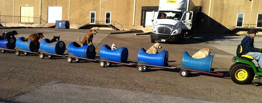 dog train1