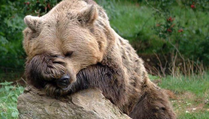 bears8