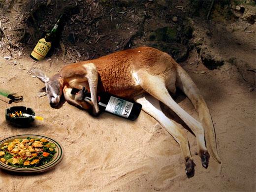 drunk_kangaroo1