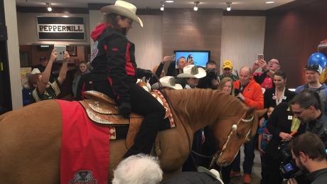 calgary-stampeders-horse-in-winnipeg