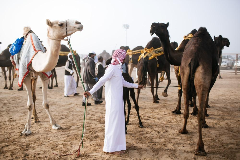 camel-beauty-contest-734-1450888522-size_1000