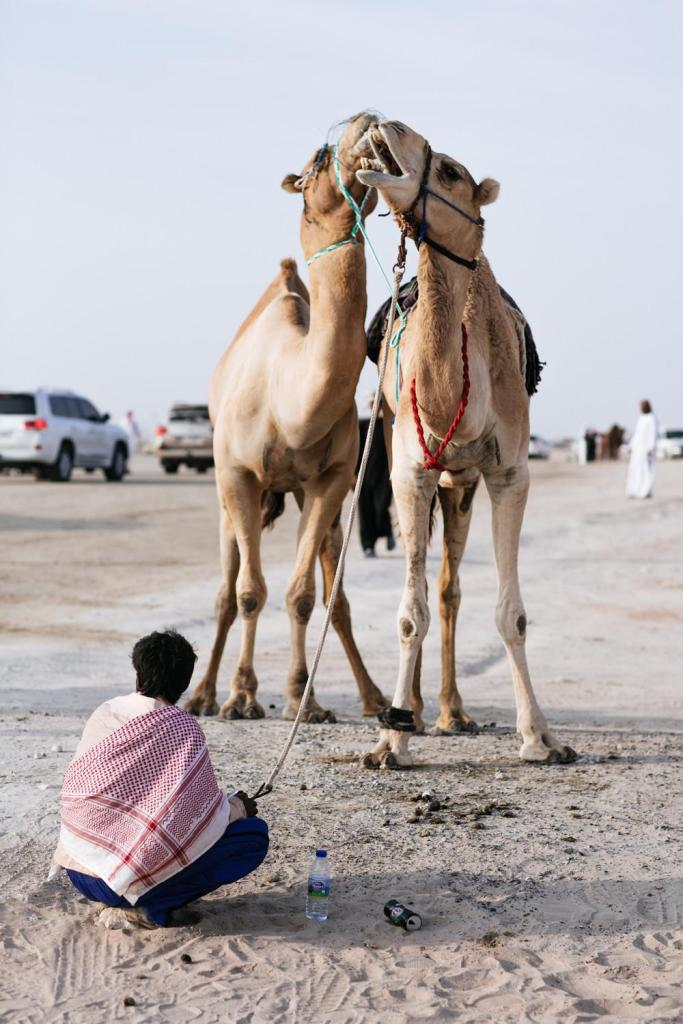 camel-beauty-contest-738-1450888514-size_1000