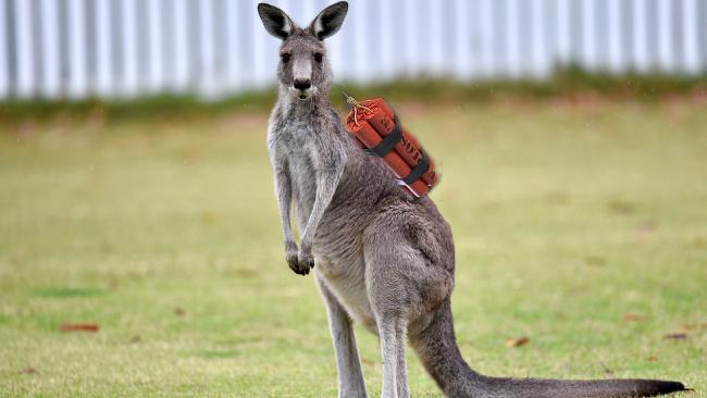 kangaroox