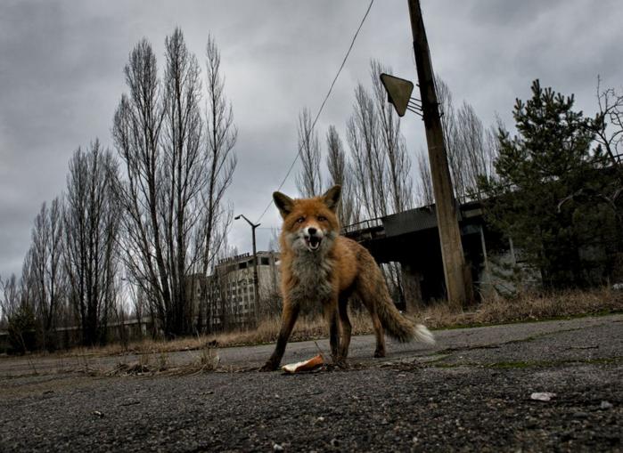 nat geo chernobyl