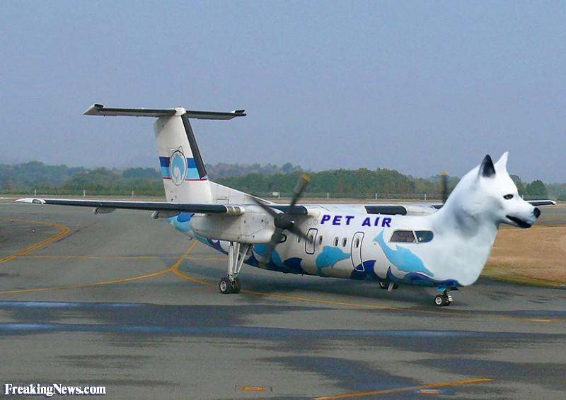 plane11 - Copy