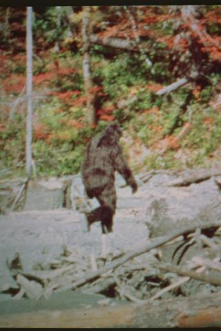 bigfoot1 (2)