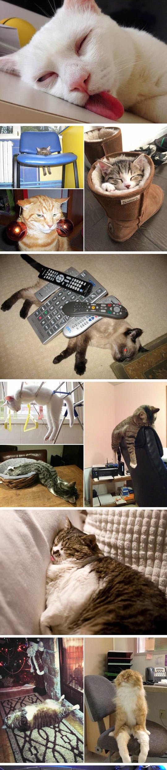 funny-cats-sleeping-everywhere-control-remote