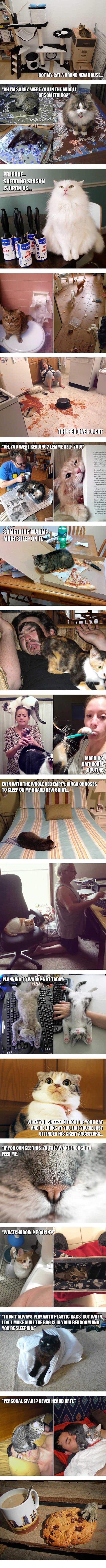 cool-cat-people-struggle