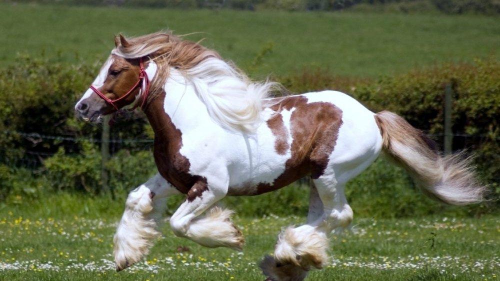 horse2