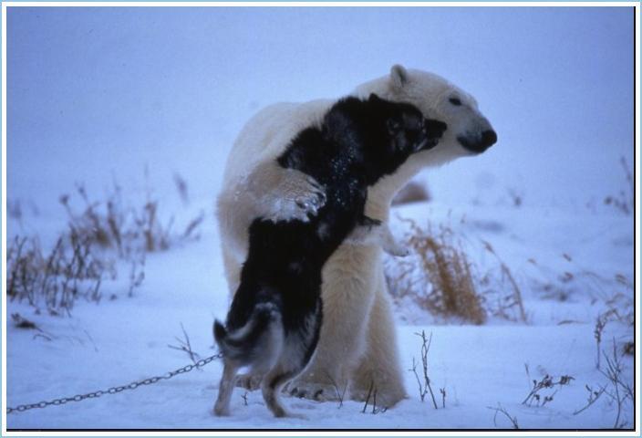 bear-and-dog-3
