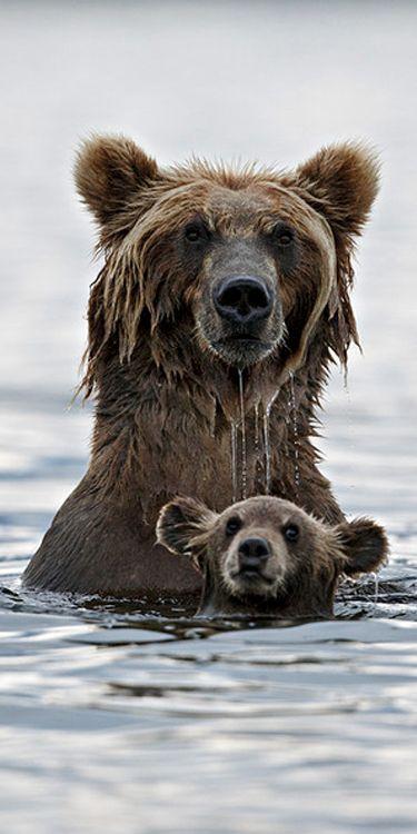 bearx1