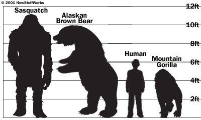 bearx13