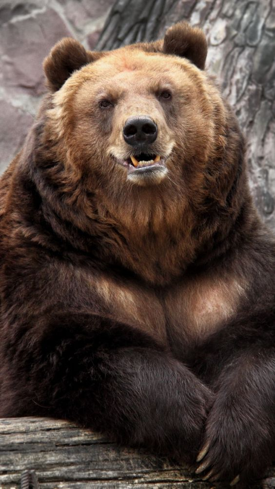 bearx2