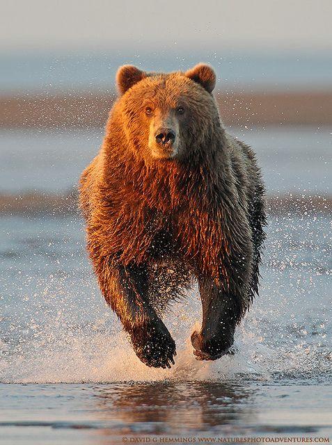 bearx3