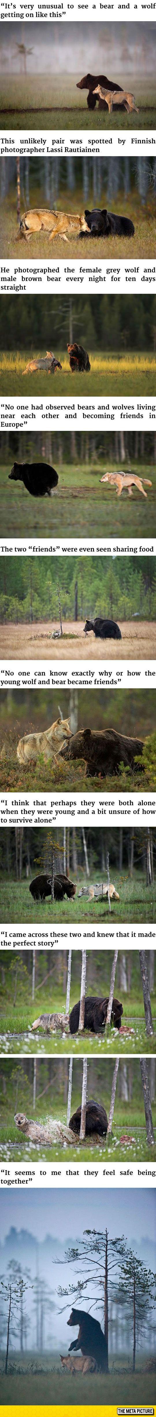 bearx5
