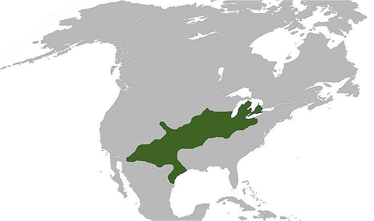 aa-massasauga-rattlesnake
