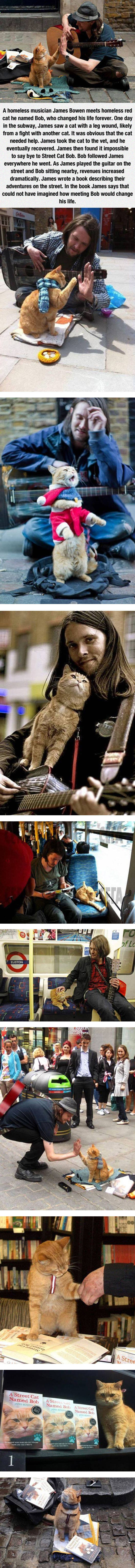 cool-homeless-musician-cat-guitar