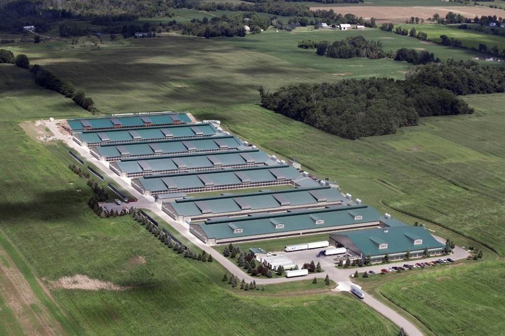 industrial-chicken-farm-michigan